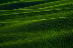 Green Texture (Antonio Cinotti ) Tags: landscape paesaggio toscana tuscany italy italia siena hills colline campagnatoscana cretesenesi asciano rollinghills tamron tamron150600 nikon nikond500 d500