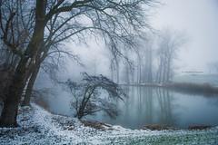 For the love of white (Ingeborg Ruyken) Tags: shertogenbosch autumn mist fall flickr snow ochtend 500pxs empel instagram empelsedijk sneeuw natuurfotografie morning koornwaard herfst fog