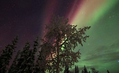 Christmas Colors in the Sky (Katy on the Tundra) Tags: northernlights auroraborealis christmascolors nightsky hoarfrost