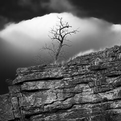 Lonely Tree II (Dalliance with Light (Andy Farmer)) Tags: rock trees outcropping artmuseum landscape nikon105mmf25 philly rocky cliff goldenhour fairmounthill nikkor minimalist philadelphia nature pennsylvania unitedstatesofamerica us