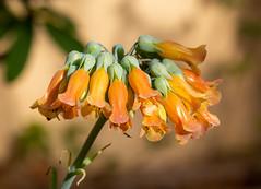 Flowers (LuckyMeyer) Tags: makro flower fleur sun light orange green botanical garden