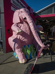 Please Do Not Feed (Steve Taylor (Photography)) Tags: elephant tusk sitting animal sculpture pink red blue green newzealand nz southisland canterbury christchurch