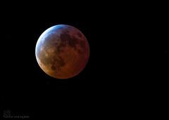 Super Blood Wolf Moon! (Estrada77) Tags: moon lunareclipse northern illinois kanecounty nightphotography nikon nikond500200500mm nature jan2019 outdoors sky
