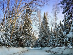 One must maintain a little bit of summer, even in the middle of winter.  Henry David Thoreau (Laura Rowan) Tags: snow sunshine minnesota saxzimbog 40f notwindchill happy landscape
