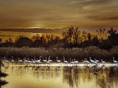 Camargue (Olympus Passion eric leroy) Tags: vert olympus omd em1 mkii zuiko camargue provence paca sud oiseaux birds nature wildlife wwwolympuspassionfr