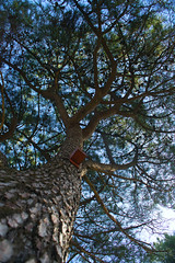 Tree tops (lebre.jaime) Tags: portugal beira covilhã jardimbotânicodemontanha tree treetop nikon d600 afnikkor28853545 affinity affinityphoto