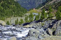 Il vallone di Ventina (giorgiorodano46) Tags: luglio2015 july 2015 giorgiorodano valmalenco valtellina lombardia italy chiareggio alpeventina hiking escursionismo