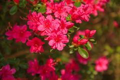 PAINTING STAMENS-REAL JARDÍN BOTÁNICO DE MADRID-Madrid (FRANCISCO DE BORJA SÁNCHEZ OSSORIO) Tags: realjardínbotánicodemadrid realjardínbotanico madrid mariposa macro macrofotografia españa exposure enfoque encuadre exposicion flechazo focuspoint focus foco flor flower flores flowers foto funny framing bokeh belleza beauty butterfly bumblebee bee instant instante passion photo pasión primavera spring summer shot stamen stamens verano vida color colour composition composición colourtemperature timeexposure tiempodeexposición temperaturadecolor nature naturaleza nice narciso detalles detalle detail details desenfoque disparo delicado delicate divertido dof depthoffield dahlia