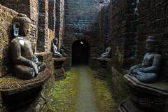 Corridor of Buddhas (shapeshift) Tags: arakan arakanese architecture asia buddha buddhist burma corridor davidpham davidphamsf mraukoo mrauku myanmar rakhine rakhinestate ruins sculpture southeastasia temple travel village myohaung myanmarburma mm