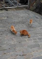 2019-02-14_08-07-56 (cod_gabriel) Tags: cat cats pisici pisică pisica caciulata căciulata călimănești călimăneșticăciulata calimanestcaciulata oltenia romania roumanie românia vodafonesmartultra6 vodafone
