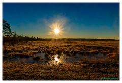 Early morning in the Kalmthoutse Heide (cstevens2) Tags: antwerpenprov belgique belgium belgië europe flanders flandre kalmthout kalmthoutseheide landschap morning ochtend vlaanderen bomen natuurreservaat sunrise zonsopgang zonsopkomst
