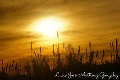 Cambrils - Barcelona. Amanecer desde el tren. Sunrise from the train. (Lucio José Martínez González) Tags: luciojosémartínezgonzález barcelona cambrils sunrise amanecer ngc españa spain europe europa yellow amarillo nubes clouds sky cielo