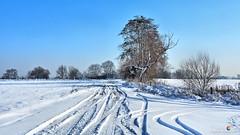 Snow tracks (Szymon Karkowski) Tags: outdoor landscape winter snow tracks road tree trees sky silesian voivodeship gliwice poland nikon d7100