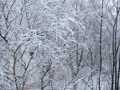 a view out of my window (VERUSHKA4) Tags: nature neve neige snow snowfall yard outdoor day canon europe russia moscow vue view ville city cityscape birch tree trunk branch bough hiver season coldseason winter february wintertime wintryseason white blanc wonderland