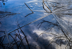Melting Ice (Don White (Burnaby)) Tags: centralpark lowerpond nikon50mm18d ice lines angles reflections