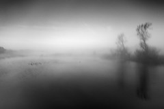 Incoherent Thoughts (johnkaysleftleg) Tags: hurworthburnreservoir mist monochrome blackwhile countydurham trees birds canon760d sigmaaf1770mmf2845dcmacro