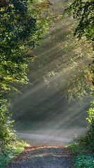 rafz_052_12102018_09'32 (eduard43) Tags: licht light strahlen lichtstrahlen wald bäume tree