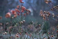 Plants (GelbGleb) Tags: colored цветное фото photo plant растение green зеленый красный red