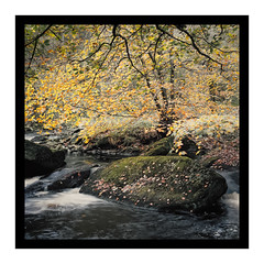 Over Hanging (gerainte1) Tags: yorkshire hardcastlecrags autumn trees woodland river colour leaves film portra160 hasselblad501