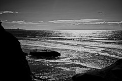 Together (mgschiavon) Tags: blackandwhite bw blackwhite sea beach nature outdoors california sunny contrast