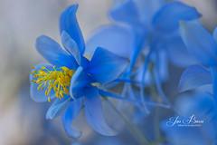 Saturday Morning (Jas Bassi) Tags: colors camera flower macrophotography macro macroflower macrolens macroworld nikon105mm nikon nikond800e closeup jasbassi jasbassiphotography jas jassi