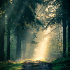 The guiding light (Tobias Schulte) Tags: sunrise sunray sunrays sonnenstrahlen strahlen rays sun tree trees baum bäume path road weg strase shadow schatten light licht early früh morning morgen morgens forest forrest wald green grün gelb yellow sonnenaufgang wood