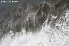 The bright waves for surfers, El Salvador (Sebastiao P Nunes) Tags: elsalvador playas praias beaches pacificocean oceano pacifico ondas surfer surfista mar canoneos70d nunes snunes spnunes spereiranunes lapaz sunzal