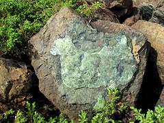 Rack Samples from Bay of Islands Ophiolite Massifs (caboxgeopark) Tags: ophiolites bayofislandsophiolites peridotite igneous plutonic lewishills blowmedown blowmedownmountains northarmhills tablelands tablemountain newfoundland mantle oceancrust gabbro