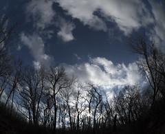 Winter Sky Over Volo Bog (Sean Anderson Media) Tags: trees forest sky clouds nature winter wintersky woods volobog illinois sonya7s rokinon75mm fisheye fisheyelens sunset landscape fotodiox lensadapter microfourthirdstosonyemount