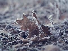 Winter Frost Bokeh - 21. Januar 2019 - Schleswig-Holstein - Deutschland (torstenbehrens) Tags: winter frost bokeh olympus ep5 m40150mm f4056 r 21 januar 2019 schleswigholstein deutschland