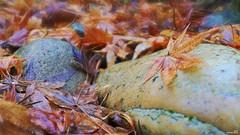 Serenity (Un jour en France) Tags: serenity zen feuille roche jardin automne hiver rouille canoneos6dmarkii canonef1635mmf28liiusm