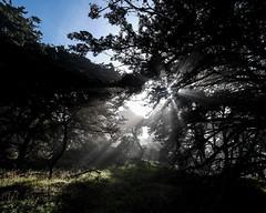 Point Lobos State Natural Reserve 1/18/19 (Sharon Mollerus) Tags: carmelbythesea ca cfptig19
