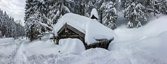 snow and more snow (genelabo) Tags: genelabo trees bäume winter snow schnee laber oberammergau bavaria germany deutschland bayern monochrome white weiss forest tree landscape sky hut hütte pano panorama ammergebirge