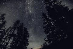 Stars and trees .... (Rockin' Daddy) Tags: universe stars darksky sky night nightphotography trees jasper jaspernationalpark alberta canada canadianrockies