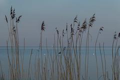 Stein, Baltic Sea, Germany 4 (mona_dee) Tags: stein balticsea beach ocean monadee