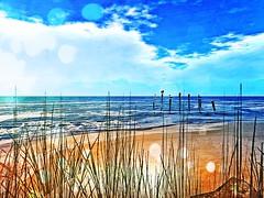 09.02.19... I stop and take a break... (mattexonar) Tags: bird sand sable mer animals nature break take stop secondlife lostdreams