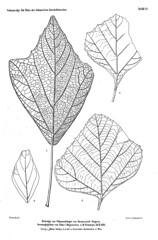 beitrgezurpal02wien_0181 (kreidefossilien2) Tags: velenovský bohemiancretaceousbasin bohemian czech republic palaeobotany flora kieslingswalde