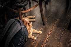 Patrick returns (Melissa Maples) Tags: istanbul turkey türkiye asia 土耳其 apple iphone iphonex cameraphone winter kadıköy caferağa moda café story floor wood brown chair patrick ginger animal kitty cat