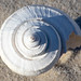 Channeled Whelk Shell