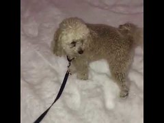 Cute Dog Love Running On Snow (tipiboogor1984) Tags: awwstations aww cute cats dogs funny