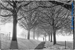 Chemin des Tilleuls (noir et blanc) (Stefano Procenzano) Tags: villarssurglâne fr svizzera ch chemindestilleuls villarsvert bertigny cantonfribourg nikon nikkor d600 nikond600 28105mmf3545d blackandwhite noiretblanc biancoenero nb bw monochrome blackwhitephotos silverefexpro2 bwartaward