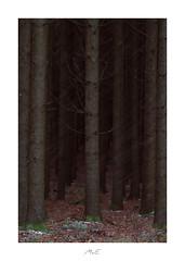 Deep Wood (Max Angelsburger) Tags: firtrees tannebäume tannen hagel hail graupel snowfall schneefall dunkler wald dark wood dicht dense black schwarz braun brown dezember december 2018 bartholomä bärenberg tour8 swabianalps albuchs landscape canon fiftyshadesofnaturestunningshotsigersmoodadventurethatislifenaturebrilliancekeepitwildnaturesultansmastershotsourplanetdailystayandwander