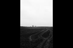 Fejø (tiltdesign2016) Tags: zuiko50mm olympusom2n analogphotography adonalrodinal125 push fejø fejo dänemark denmark plustekopticfilm7600ise bw 4001600asa kodaktmax400 natur