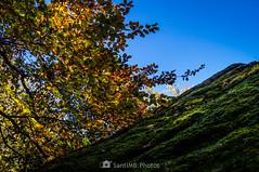 Policromía (SantiMB.Photos) Tags: 2blog 2tumblr 2ig bosque forest roquesencantades rocas rocks garrotxa girona otoño autumn cielo sky geo:lat=4205267600 geo:lon=250457800 geotagged santfeliudepallerols cataluna españa esp