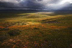 Antelope Valley (SkylerBrown) Tags: antelopevalleycaliforniapoppyreserve california clouds flowers hills landscape nature spring superbloom travel