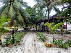 180802-10 La vie sur l'île  (2018 Trip) (clamato39) Tags: olympus kohrong island île cambodge cambodia asia asie palmiers palms voyage trip