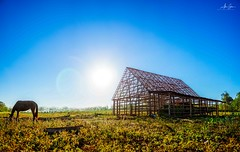 The tabaco farms of Viñales (Pinar del Rio, Cuba 2019) (Alex Stoen) Tags: alexstoenphotography cuba leicamptyp240 panorama summiluxm35mm travel viñales
