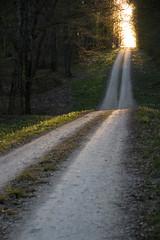 En route vers l'ouest - Go to the west (gopillentes) Tags: arbres chemin couchant forêt soleil trees wood forest sunset pathway spring printemps nature landscape paysage france bourgogne