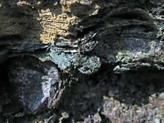 Maury Shale (Lower Mississippian; Burkesville West Rt. 90 roadcut, Kentucky, USA) 23 (James St. John) Tags: phosphatic nodule nodules phosphate phosphorite maury shale mississippian cumberland county kentucky condensed interval burkesville glauconite glauconitic