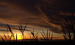 Une pluie d'or sur l'étang de l'Or (chriskatsie) Tags: gold étang mer cloud nuage sun sunset soleil beauté grass montpellier hérault mauguio carnon light lumiere luz explore